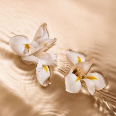 Jimmy Choo Jimmy Choo Radiant Tuberose Eau de Parfum