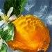 GUERLAIN Aqua Allegoria Orange Soleia Eau de Toilette
