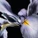 YSL Yves Saint Laurent Manifesto Eau De Parfum Intense Perfume De Mujer