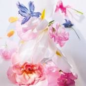 DIOR MISS DIOR EAU DE PARFUM<br> notas florales y frescas - lazo couture
